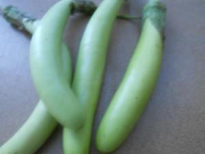 Green Eggplant_full