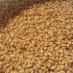 Soaked Samba Wheat